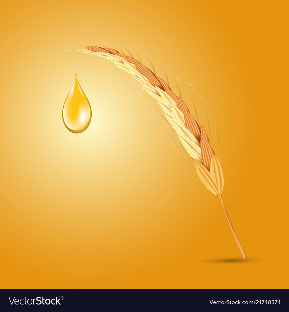 Wheat ear with oil drop