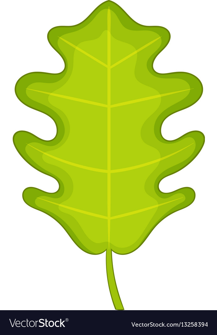 Oak leaf icon cartoon style
