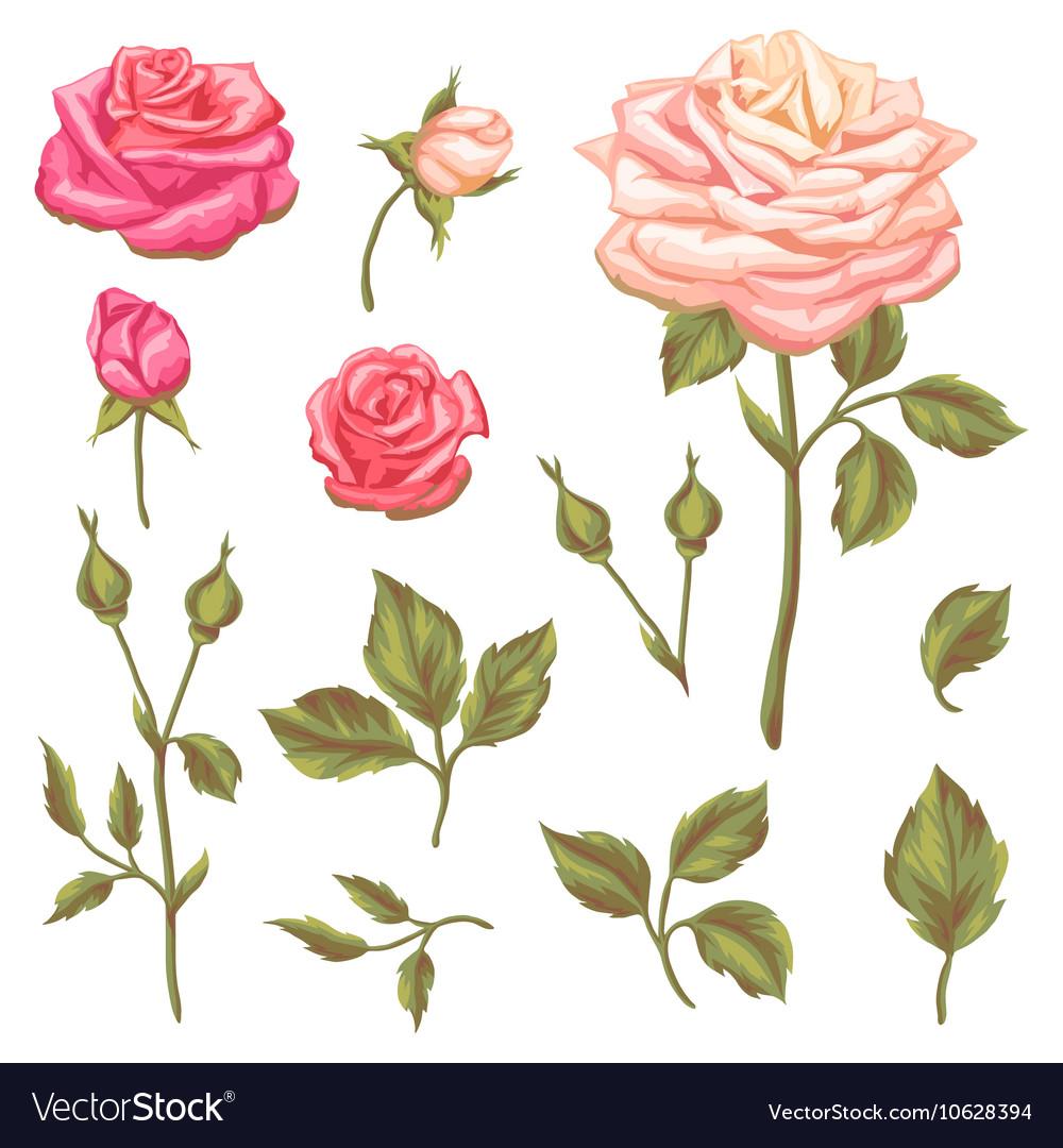 Set of floral elements with vintage roses