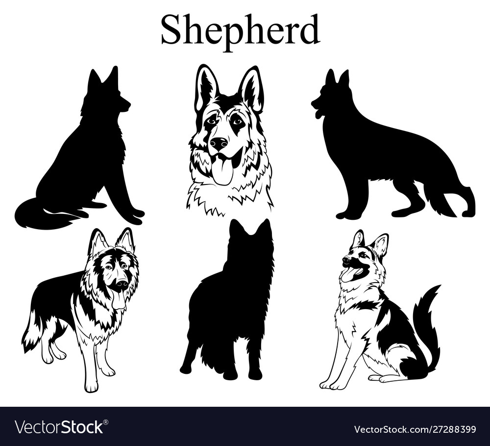 Shepherd set collection pedigree dogs black