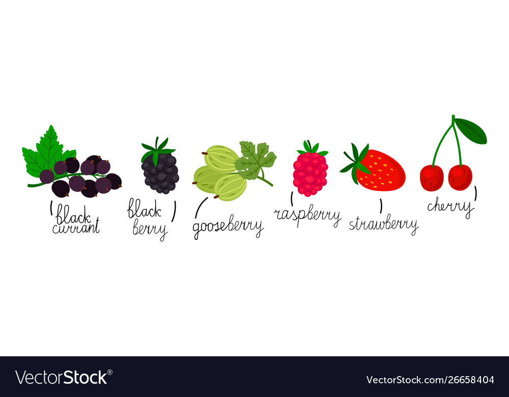 Popular berries isolated on white background hand