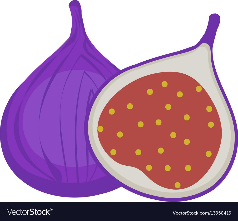 Fresh figs icon flat cartoon styleisolated on