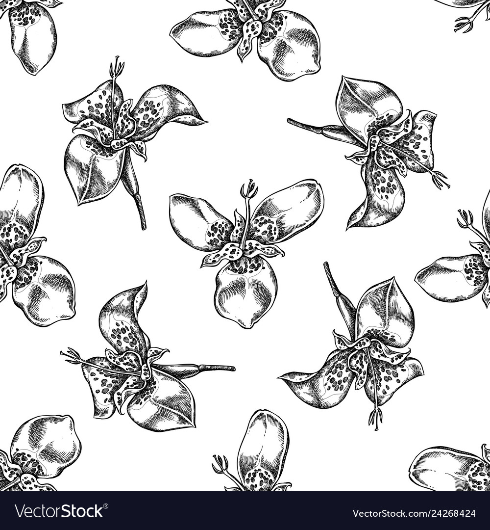 Seamless pattern with black and white tigridia