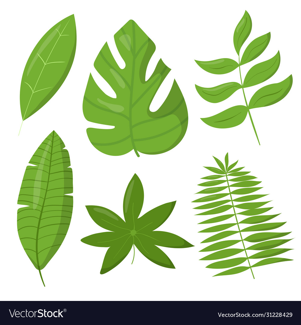 Set tropic leaves elements isolated
