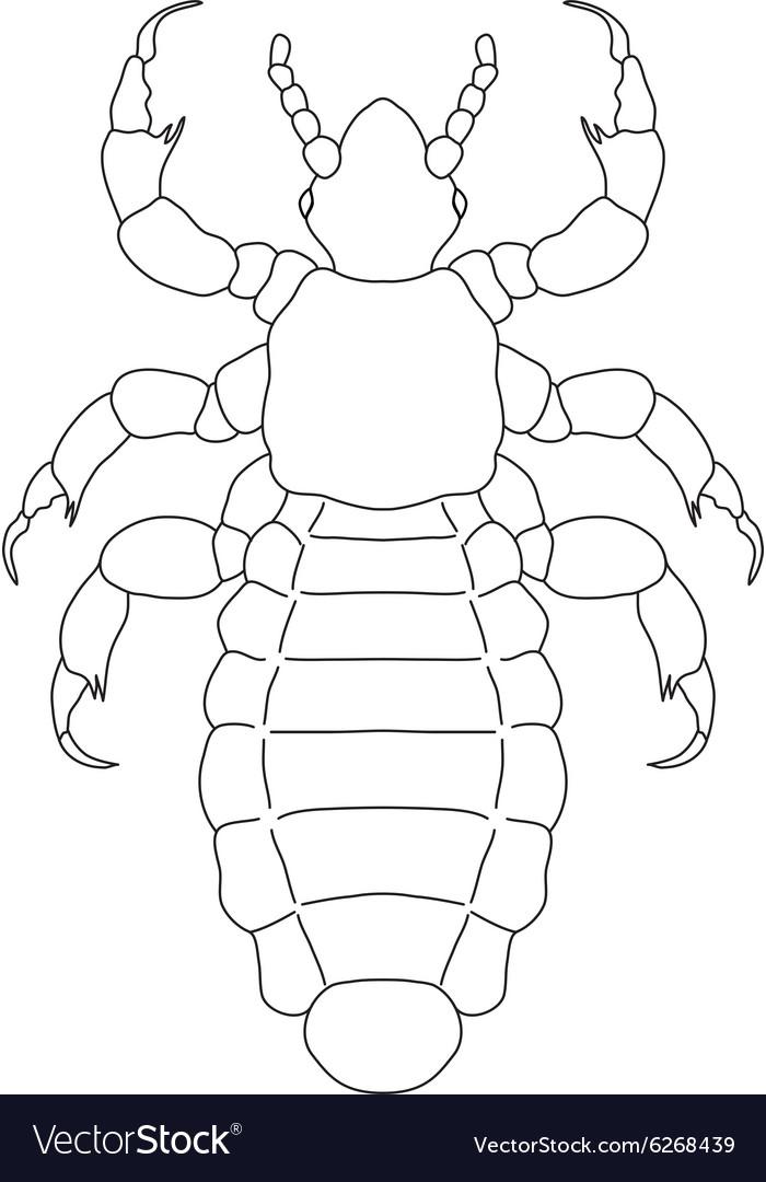 A head human louse Pediculus humanus capitis
