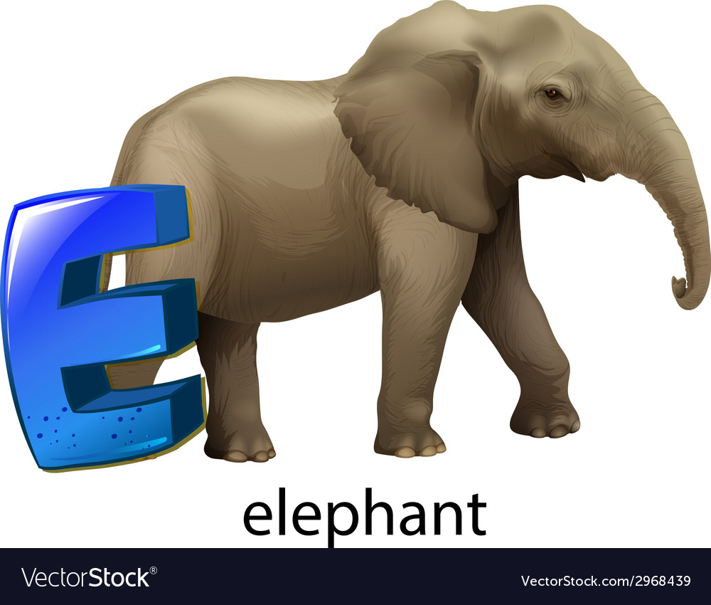 A Letter E For Elephant Vector Image