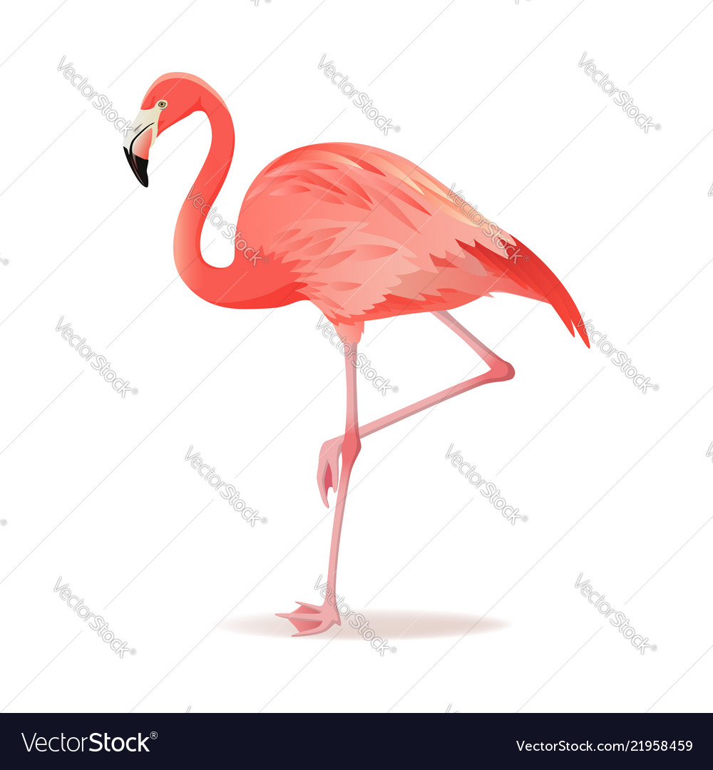 Red and pink flamingo cool