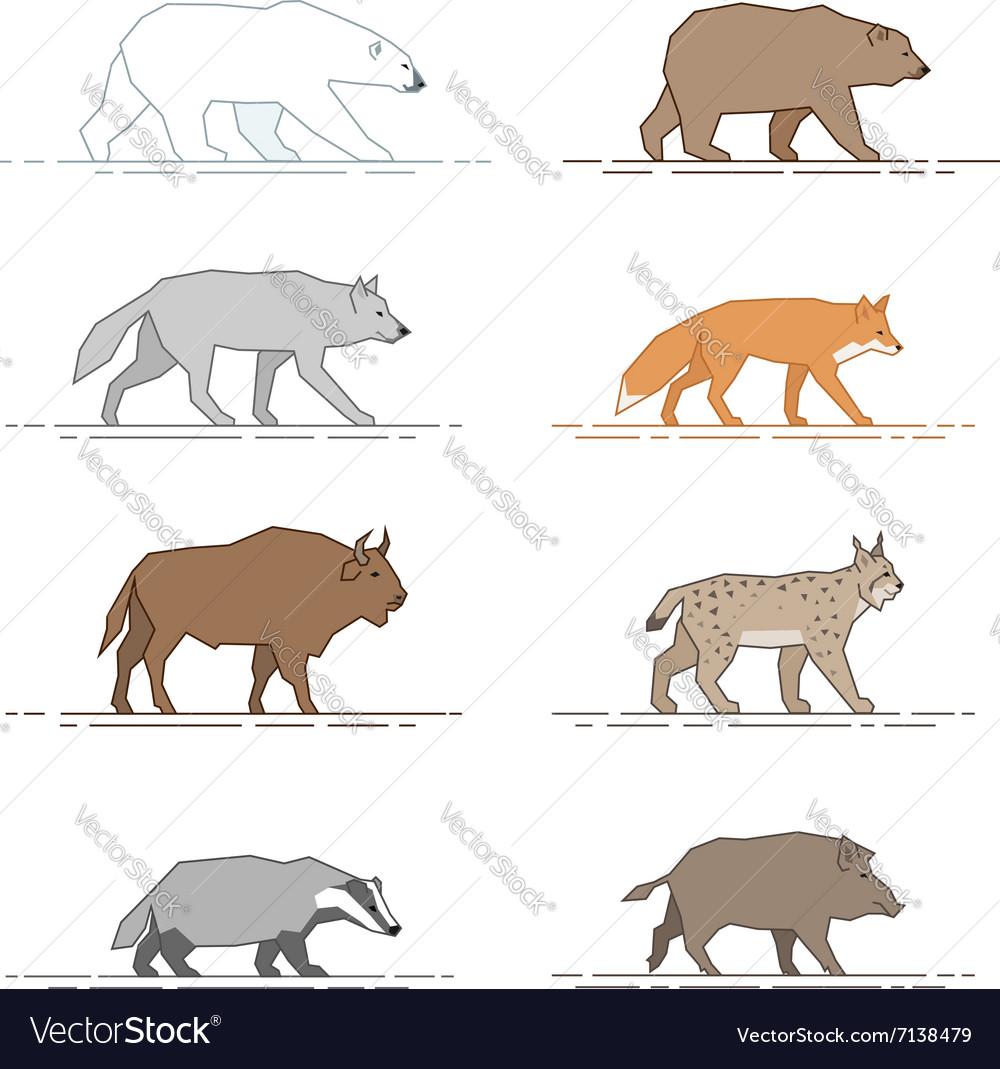 Animals motion