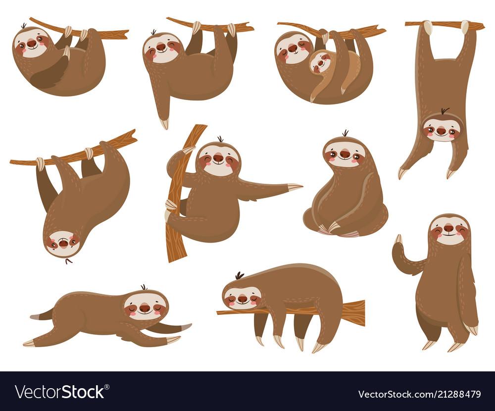 Cute cartoon sloths adorable rainforest animals
