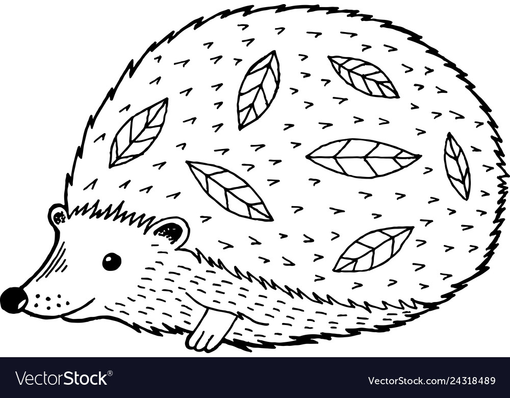 - Cartoon Hedgehog - Coloring Page For Adults And Vector Image