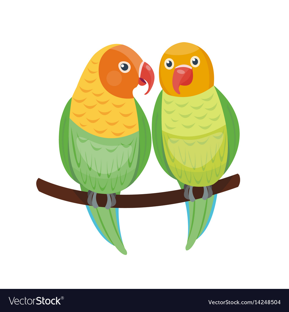 Cartoon tropical lovebird parrot wild animal bird