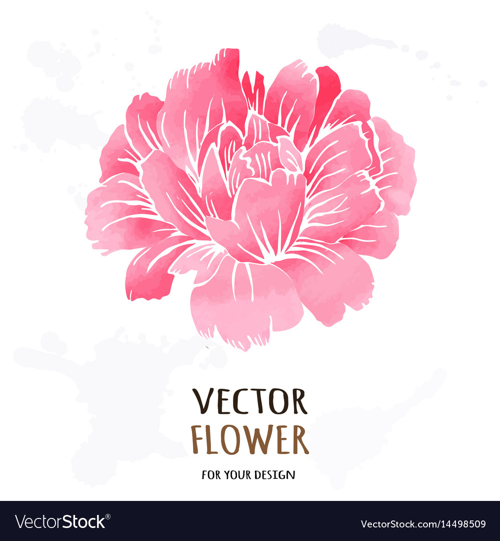 Hand drawn realistic of dahlia vector image