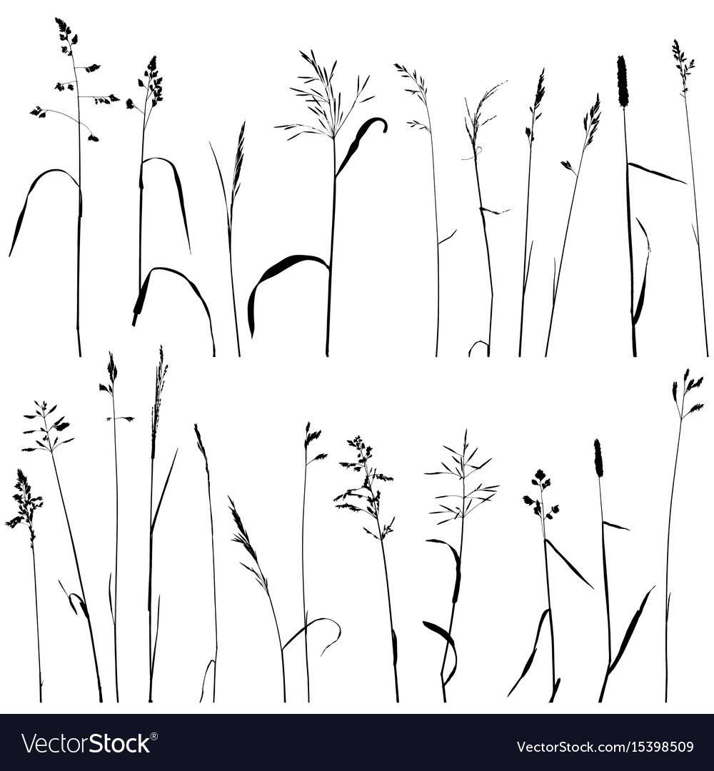 Wild cereal plants