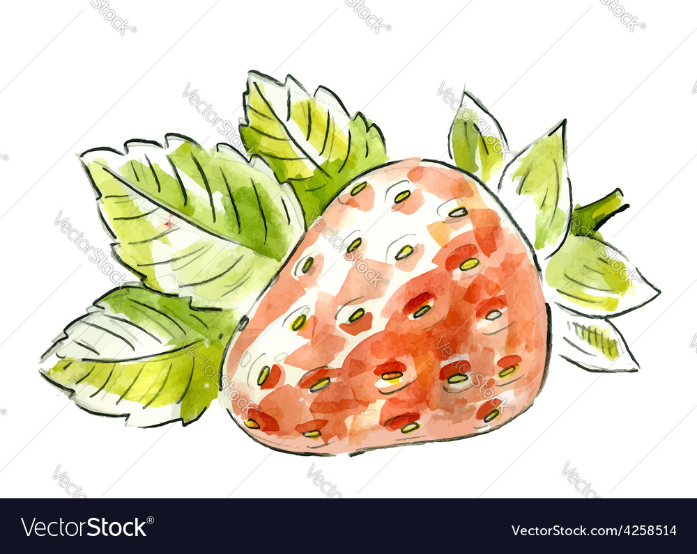 Picture of strawberry vector image