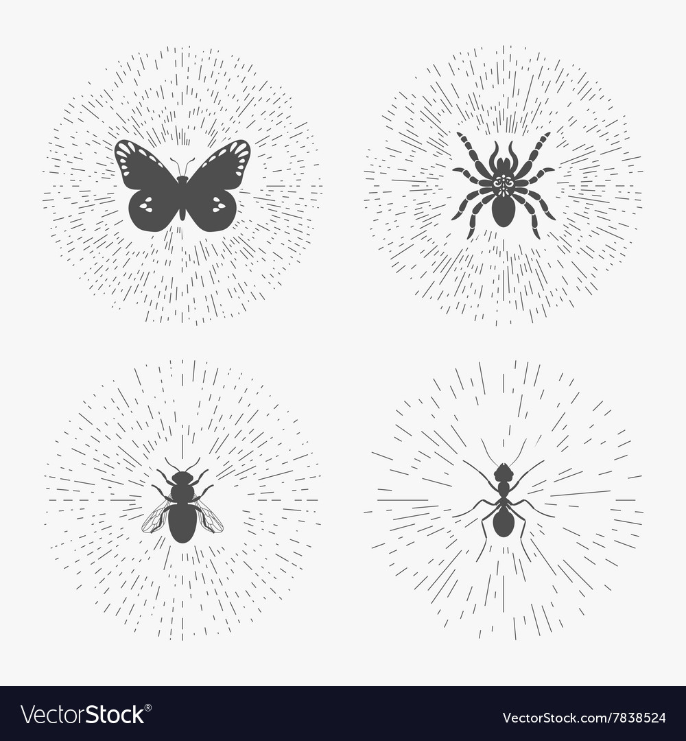 hipster logo templates with insects royalty free vector