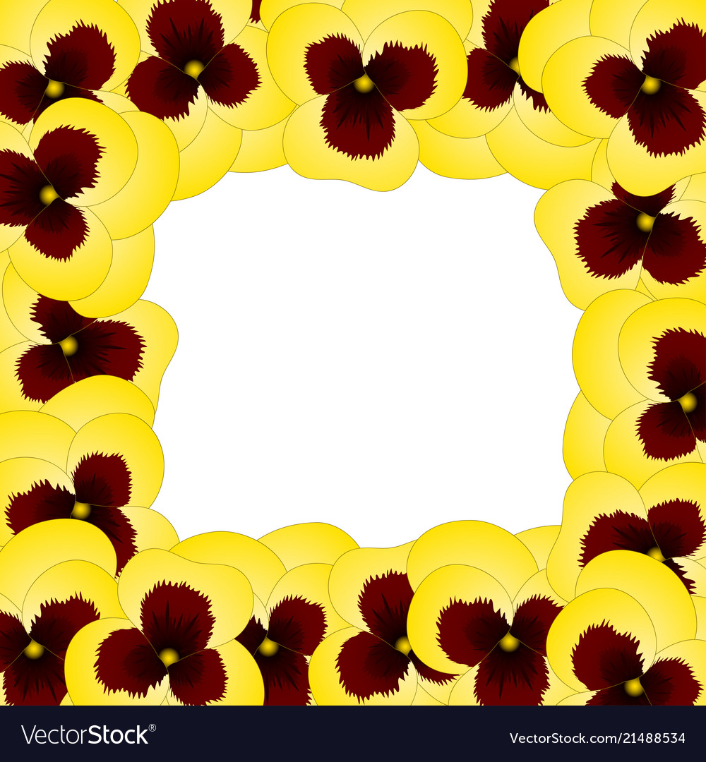 Yellow Viola Garden Pansy Flower Border Royalty Free Vector