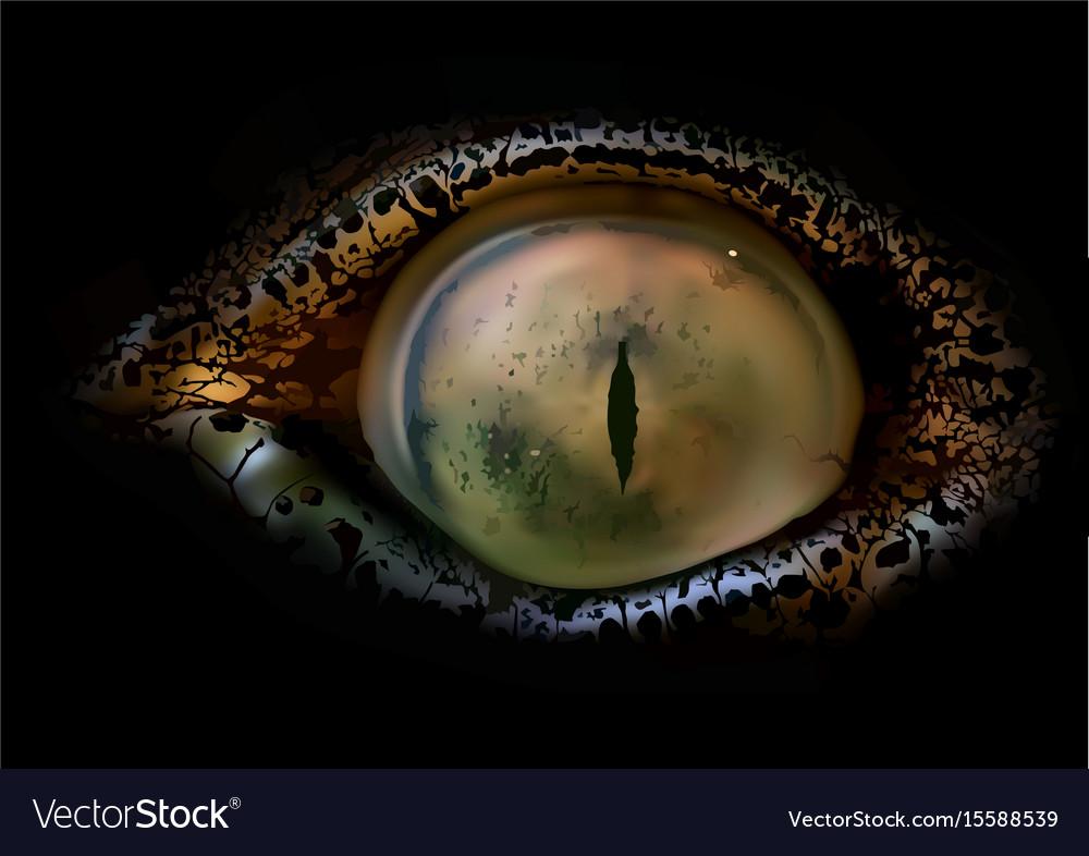 Crocodile Eye Macro Vector Image