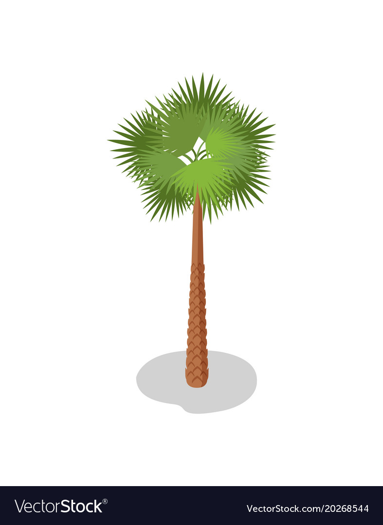 Palm tree isometric 3d element
