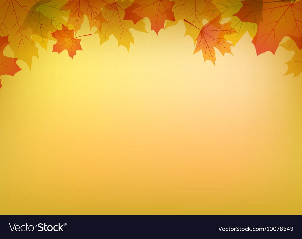 Autumn colorful leaves