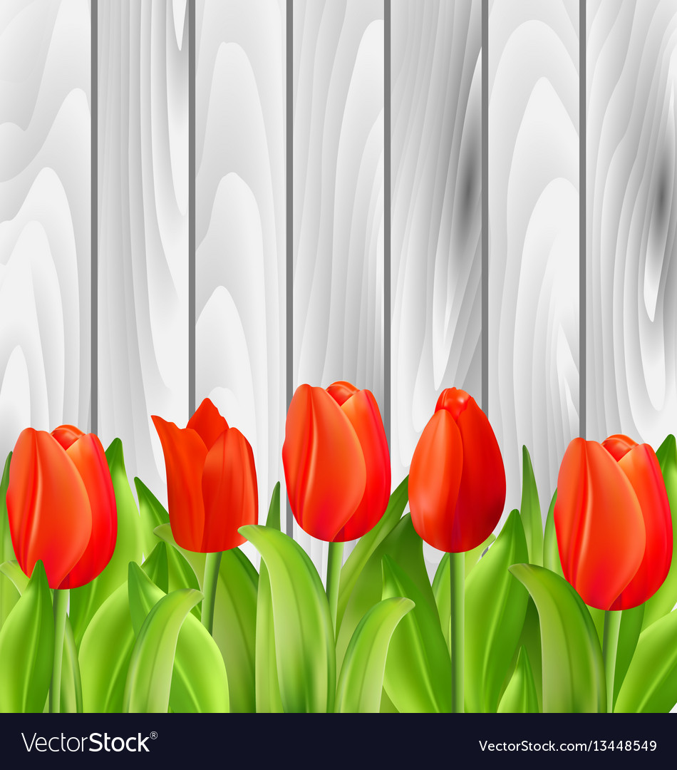 Beautiful tulips flowers on wooden background