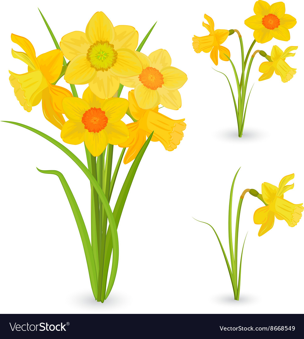 Collection bouquet of daffodils spring flowers for