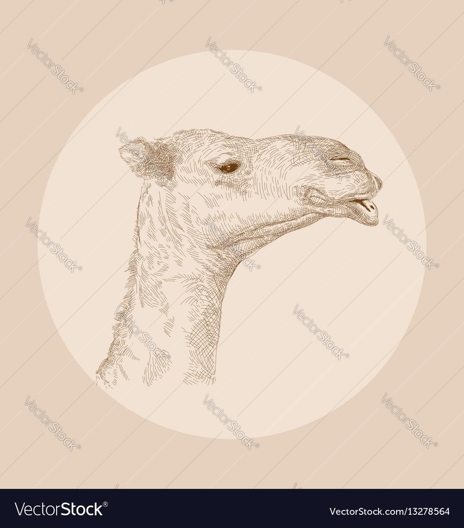 Hand drawn camel head