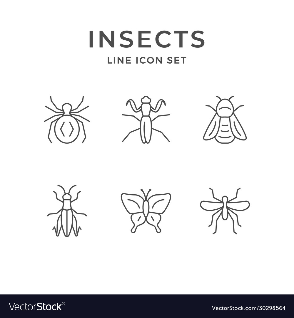 Set line icons insects