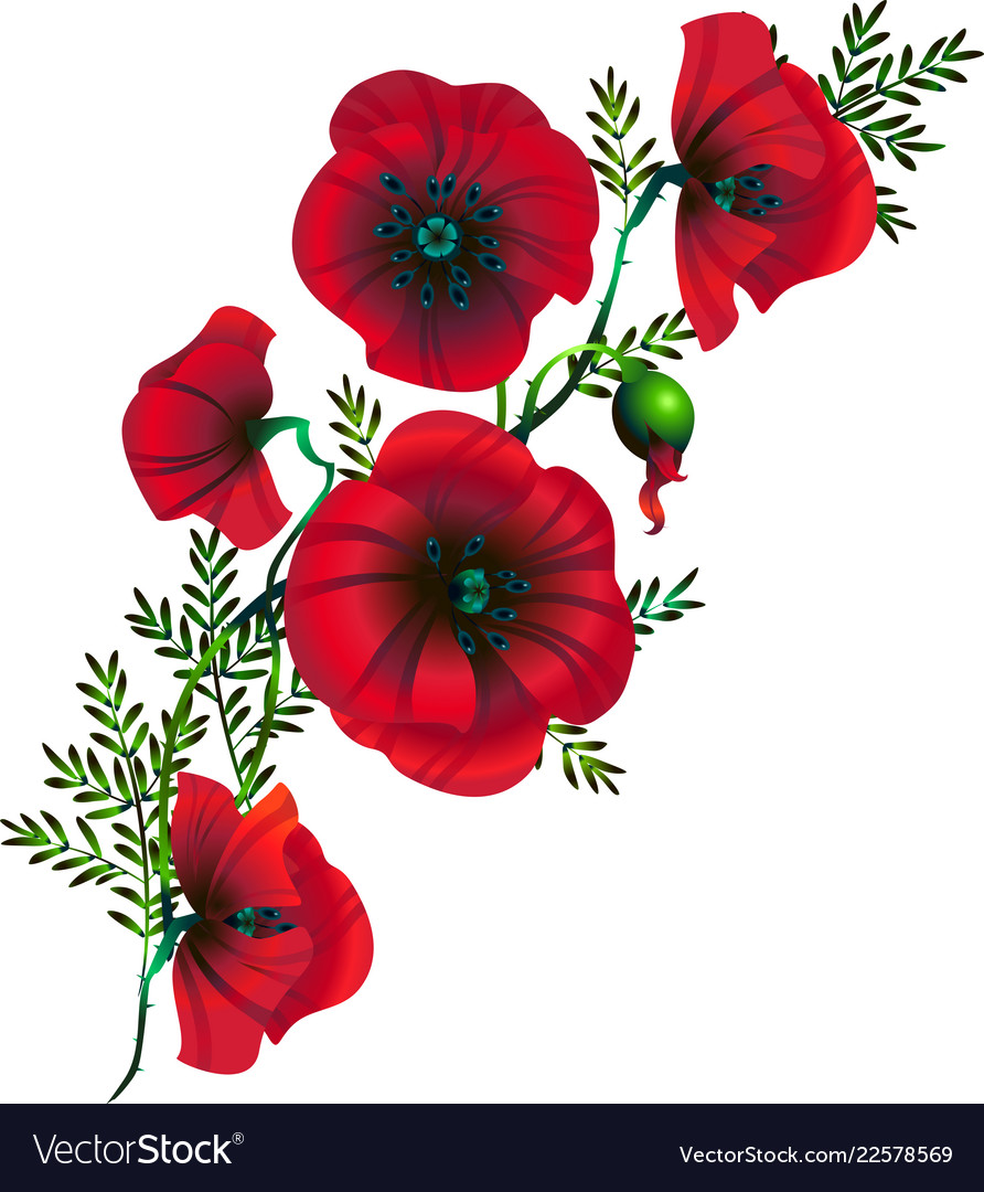 Branch of flowers of red poppies