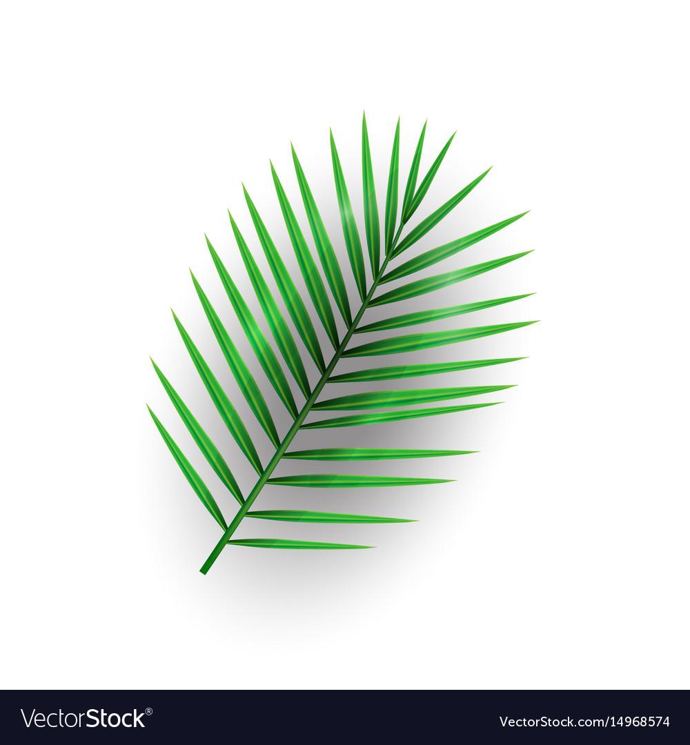 Tropical palm leaf macarthurs palm on memphis vector image