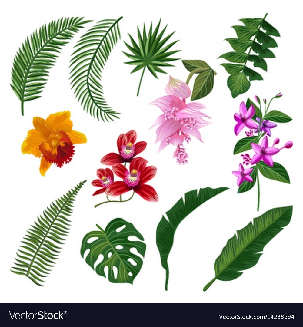 Set of tropical flowers bouquet Royalty Free Vector Image