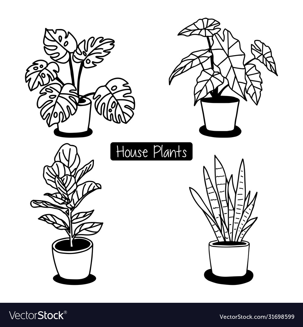 Houseplant In Pot Hand Draw Sketch Royalty Free Vector Image