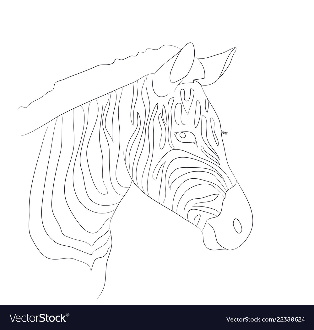 Portrait of zebra drawing lines