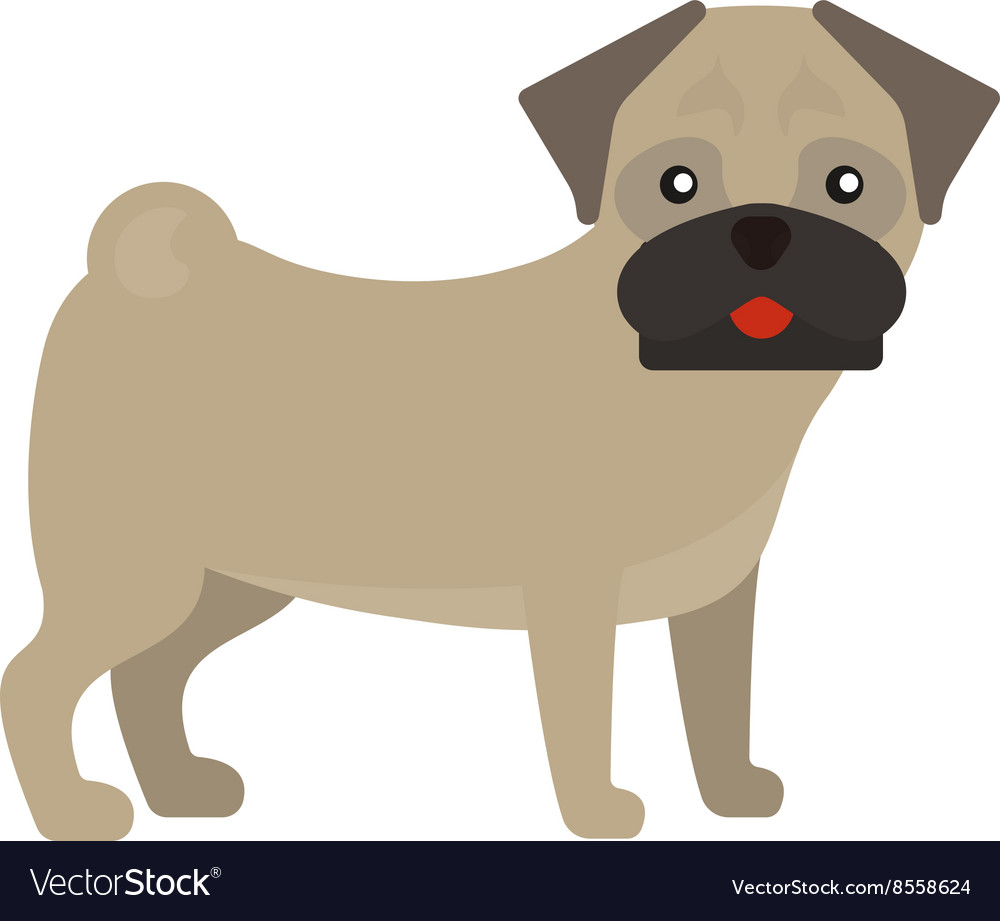 Pug dog standing animal canine purebred puppy vector image