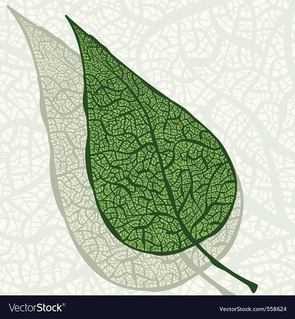Vintage hand drawn leaf