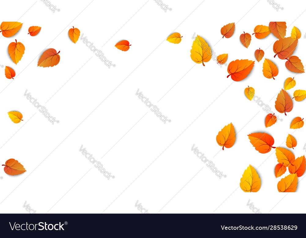 Autumn golden leaf frame maple fallen leaves
