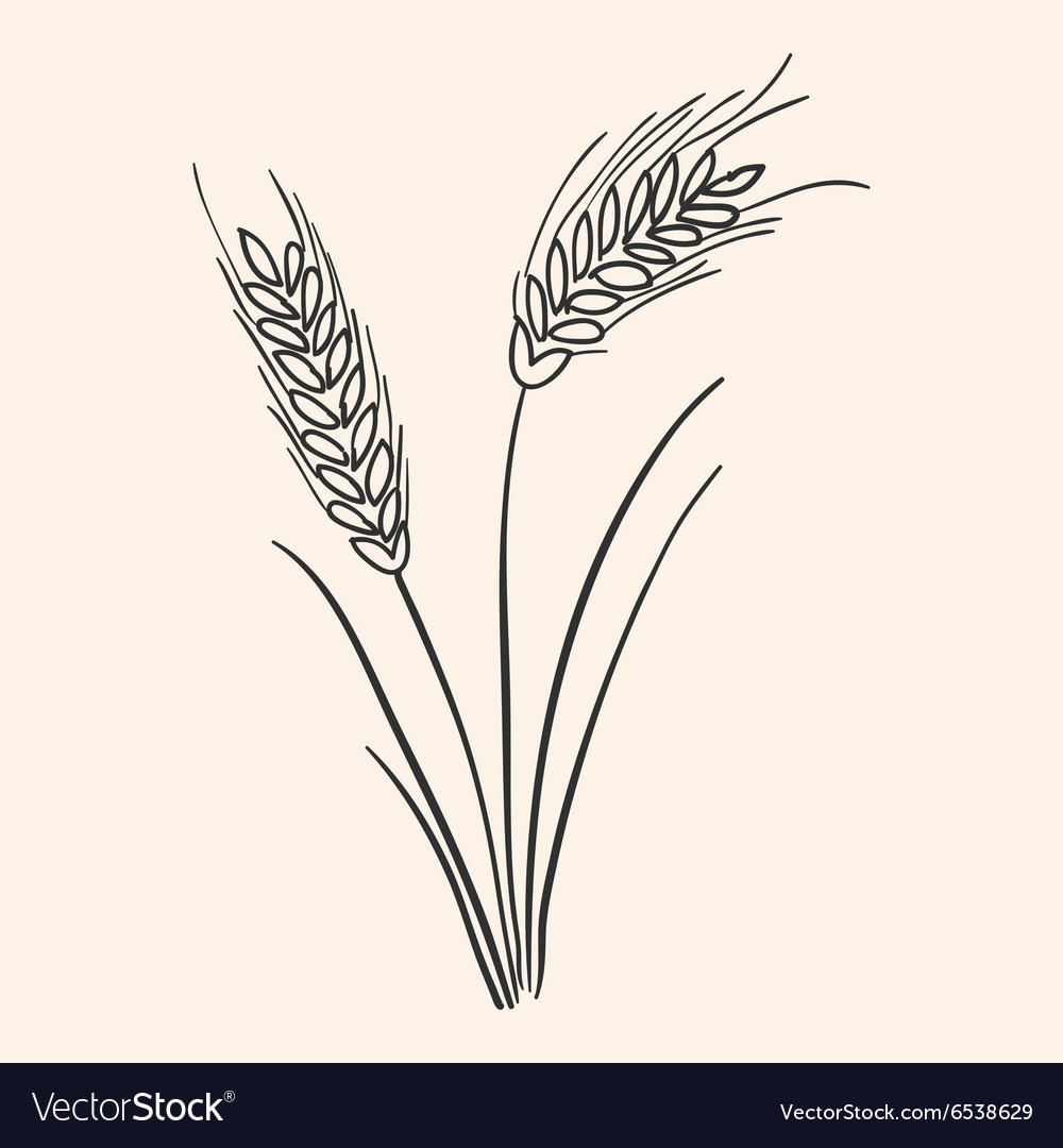 Rye Ear vector image