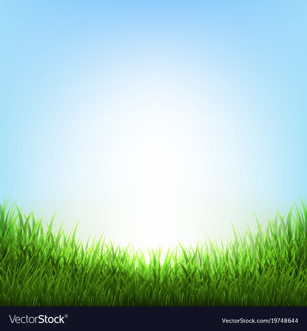 Nature background with grass Royalty Free Vector Image