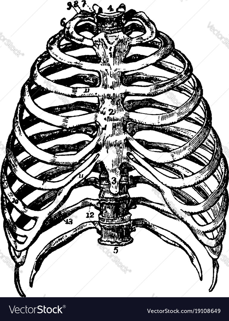 Bone tannum εισιτήρια σεξ