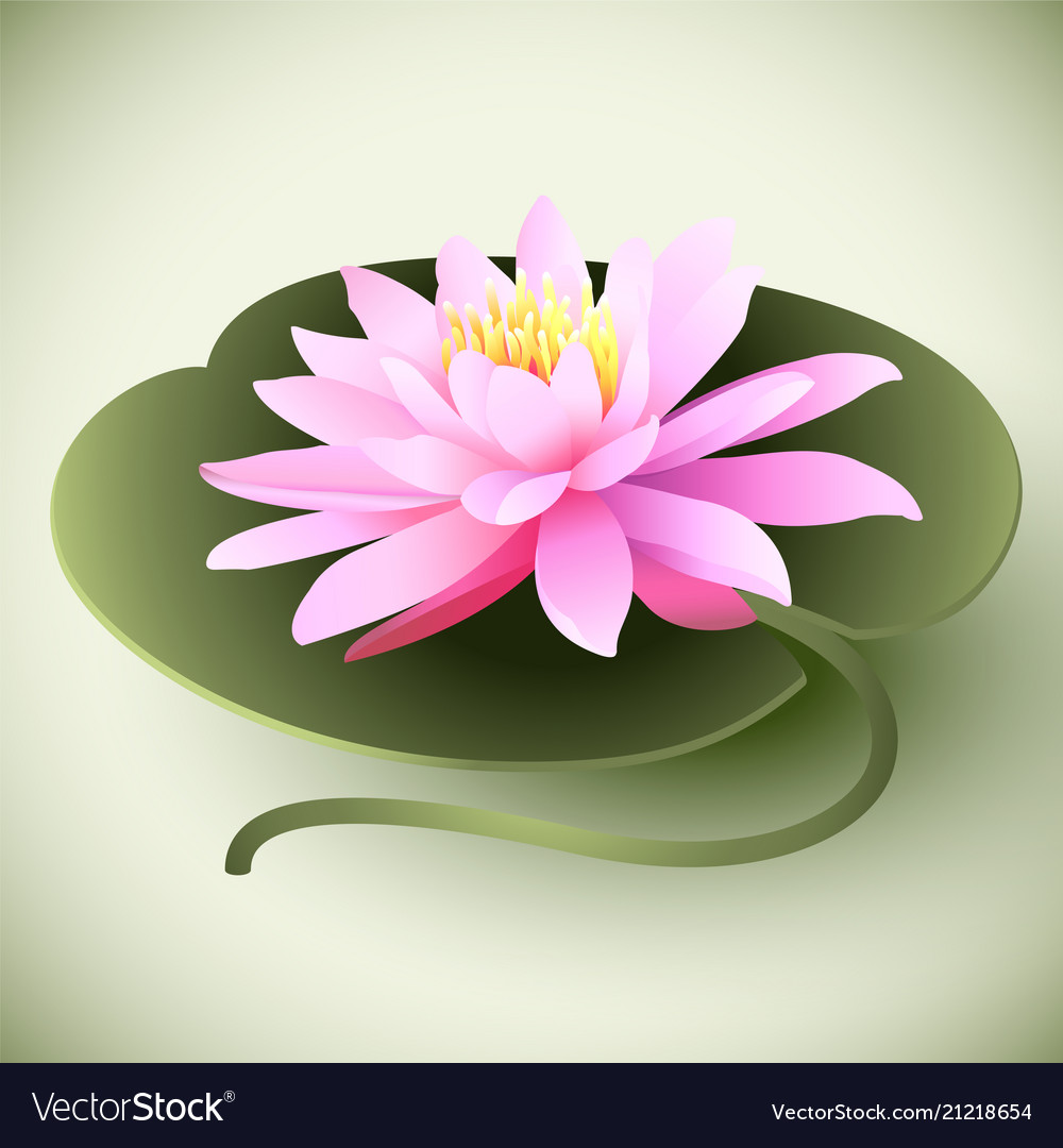 Lotus Flower On The Leaf Royalty Free Vector Image