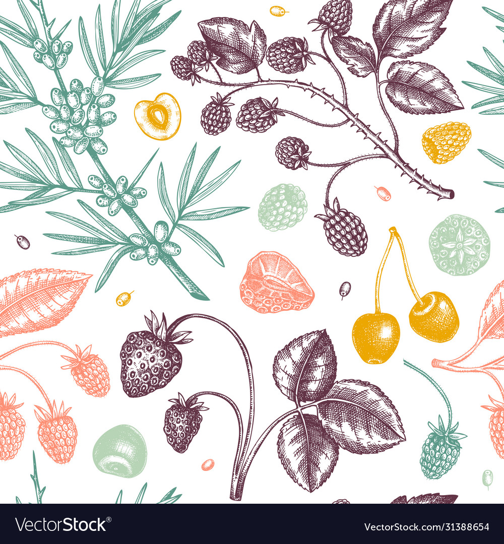 Wild berries sketches seamless pattern hand drawn vector
