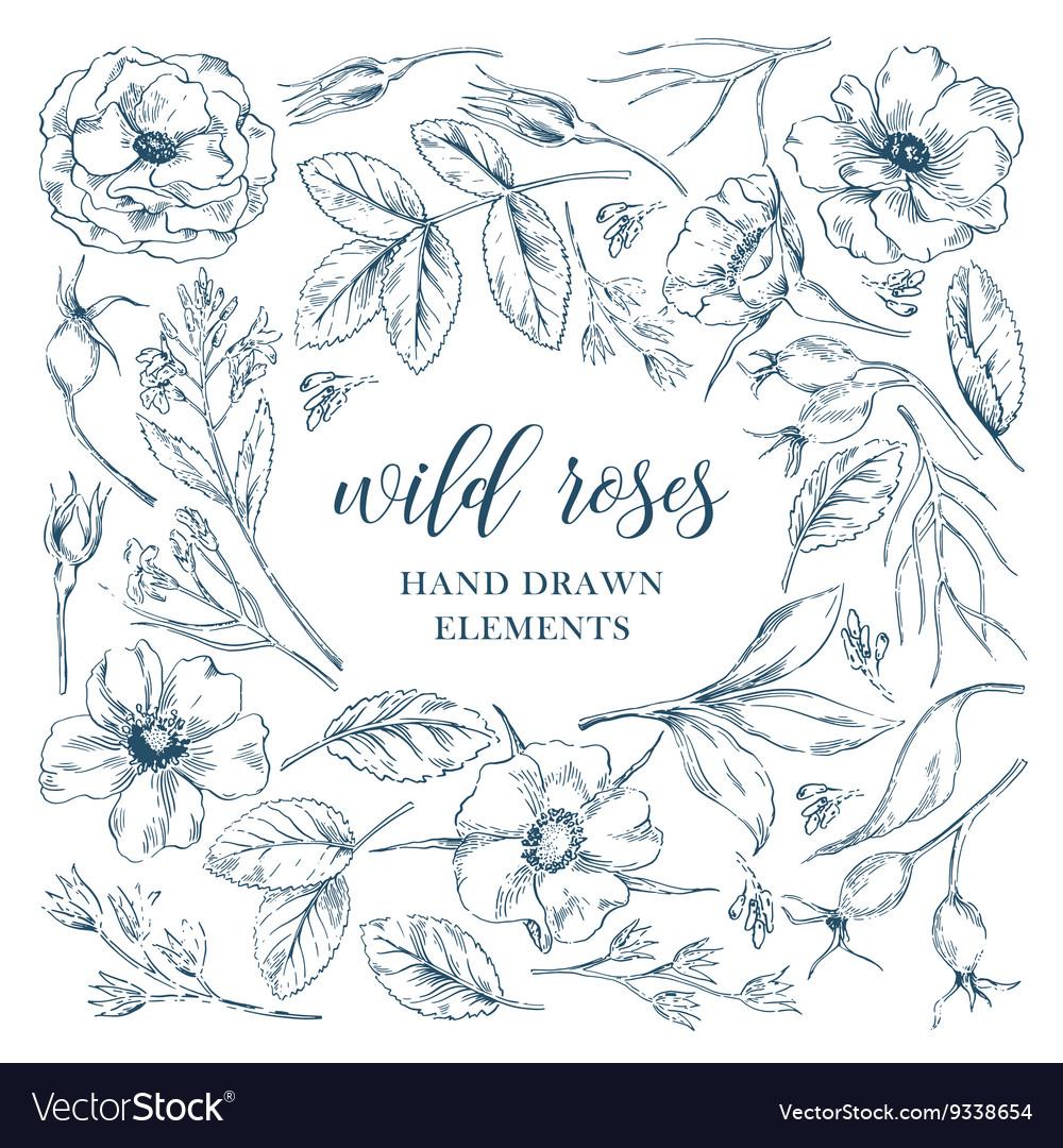 Wild rose flowers elements