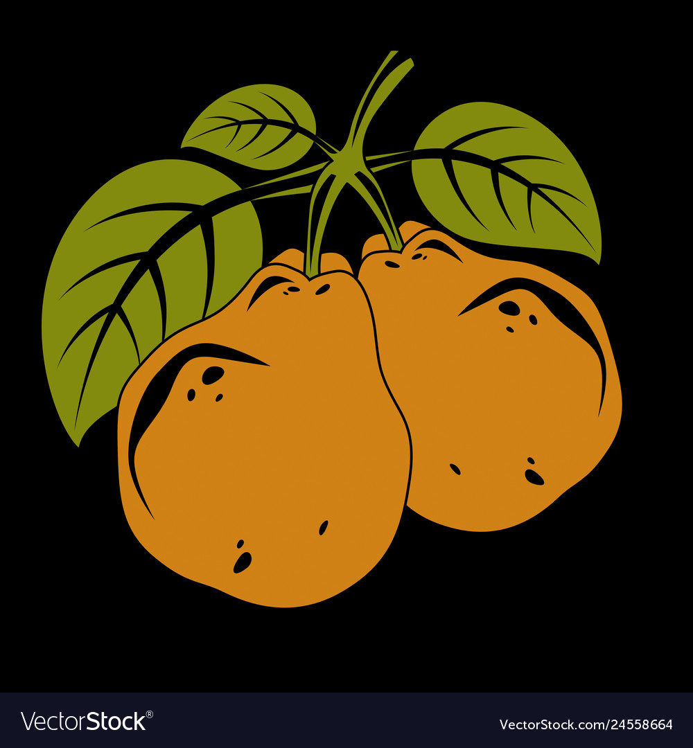 Harvesting symbol fruits isolated two organic