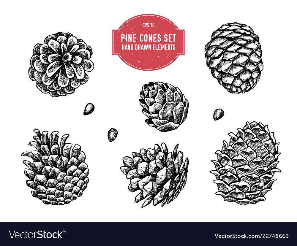 Collection of hand drawn pine cones