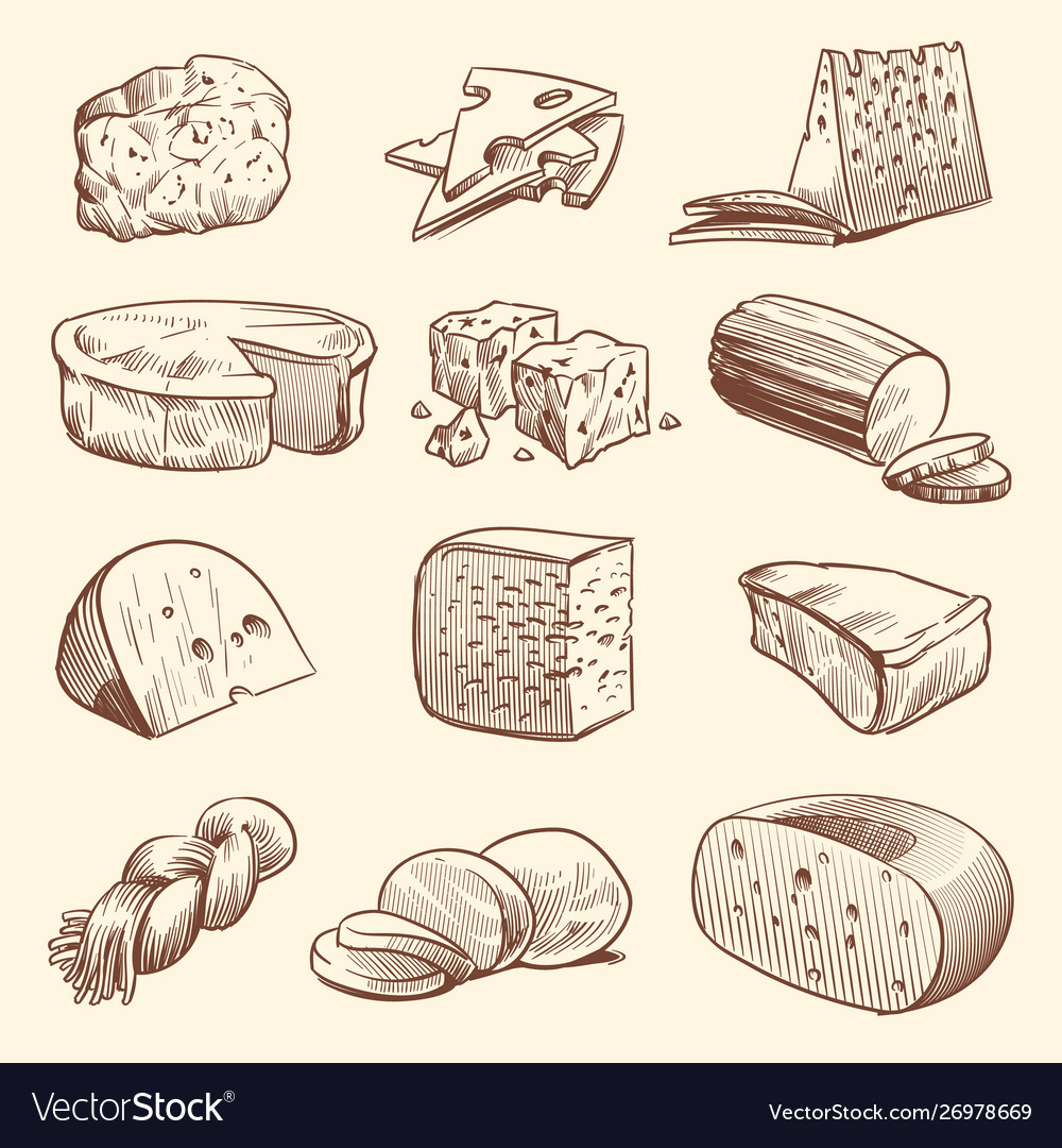 Hand drawn cheese various types cheeses tasty