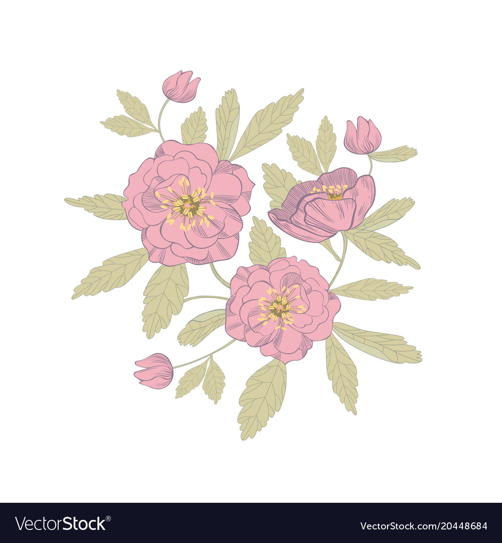 Anemone flowers design royalty free vector image anemone flowers design vector image mightylinksfo
