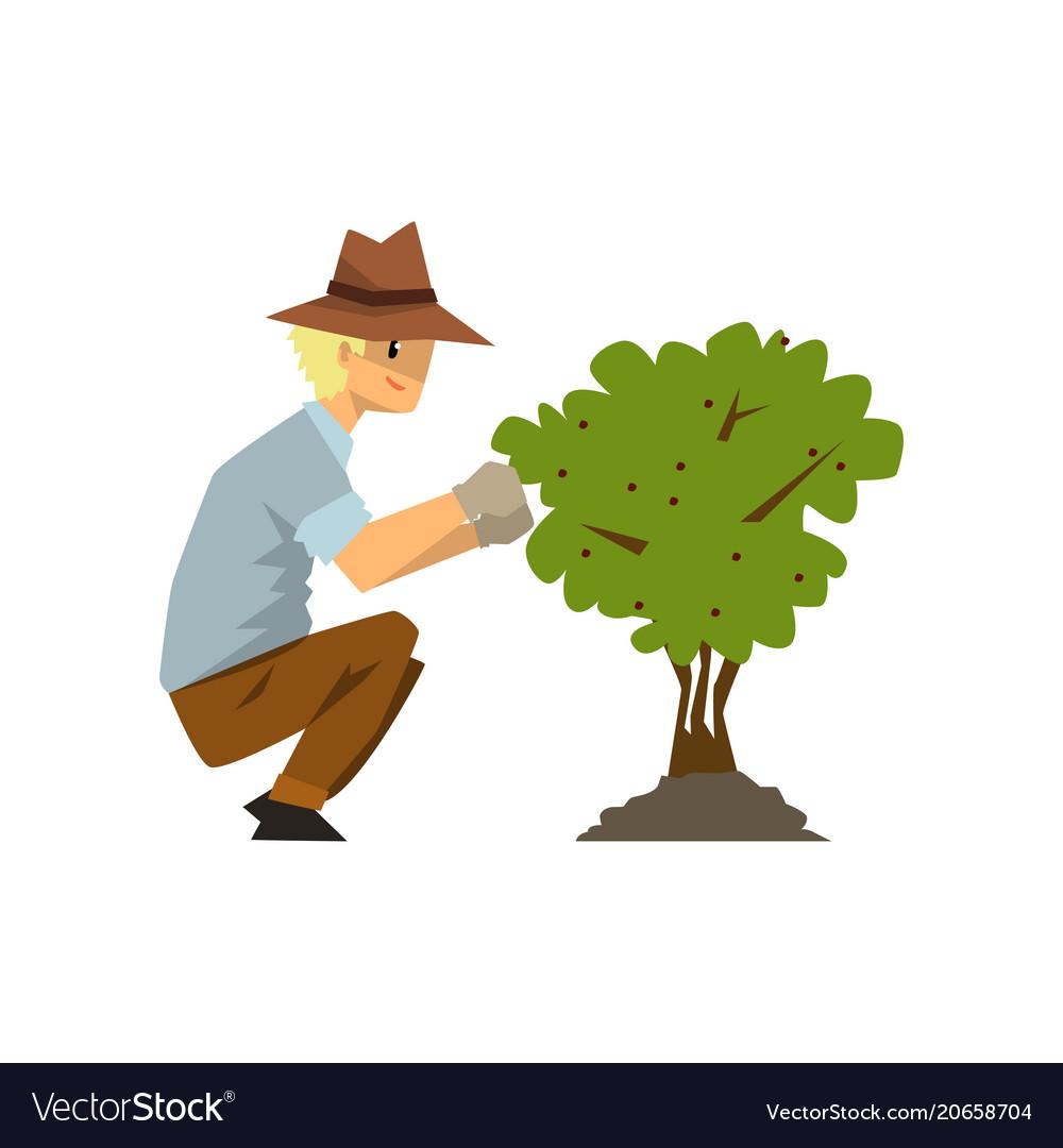 Male farmer picking berries from bush gardener at