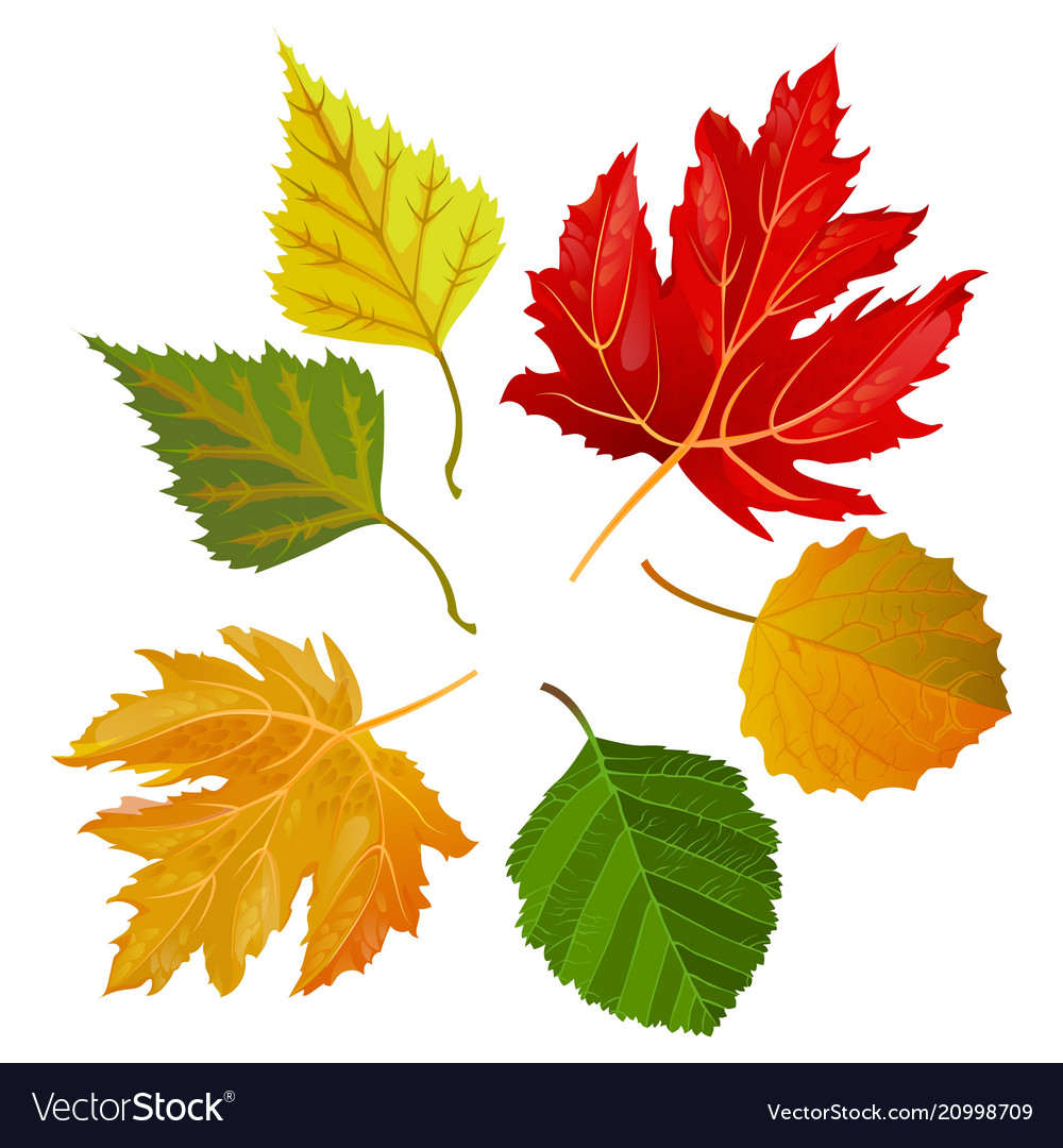 Autumn Colorful Leaves From Maple And Oak Trees Vector Image