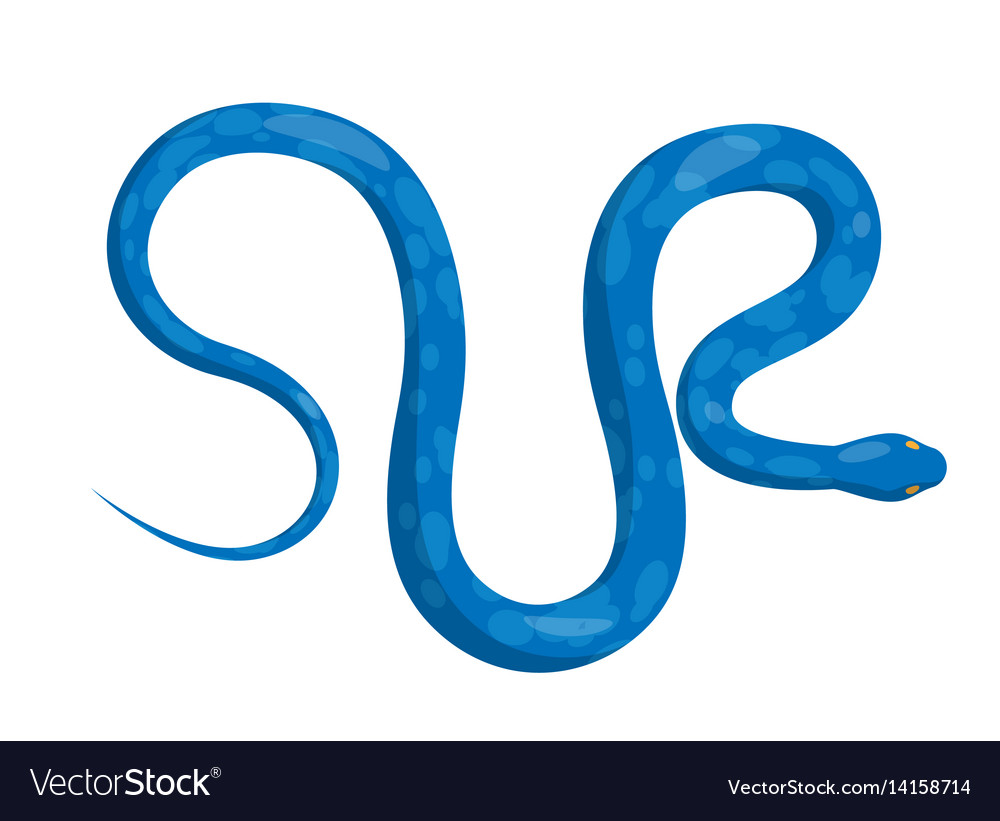 Slither blue python snake top view icon vector image