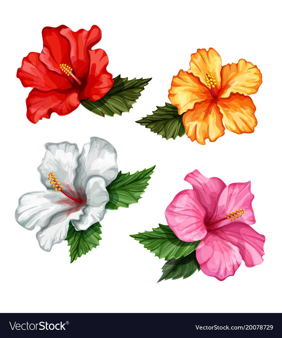 Realistic Hibiscus Flower Leaves Set Royalty Free Vector