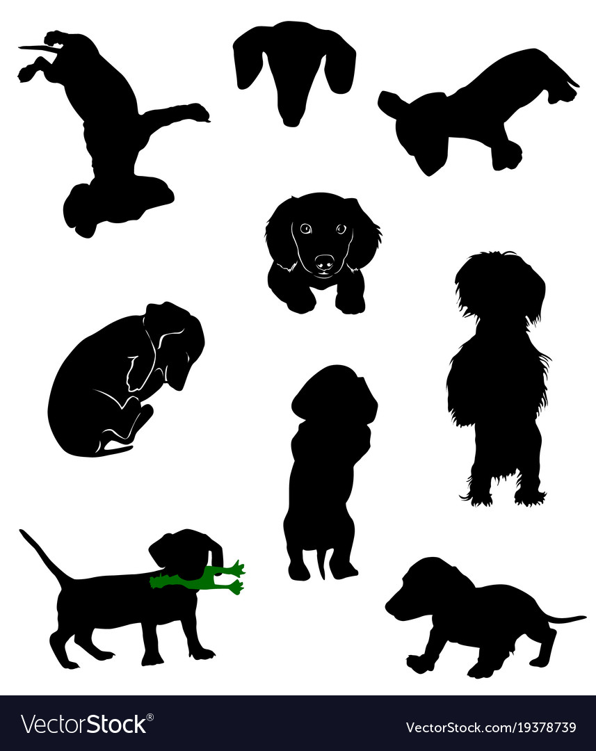 Dachshund 6 Vector Image